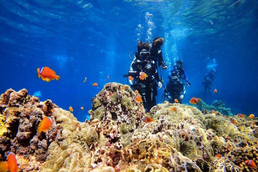 【蘭嶼】水上活動推薦/專業體驗潛水一對一教學