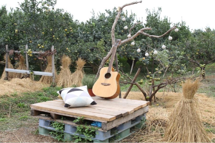 【雲林】橙色農作休閒果園。四季採果體驗