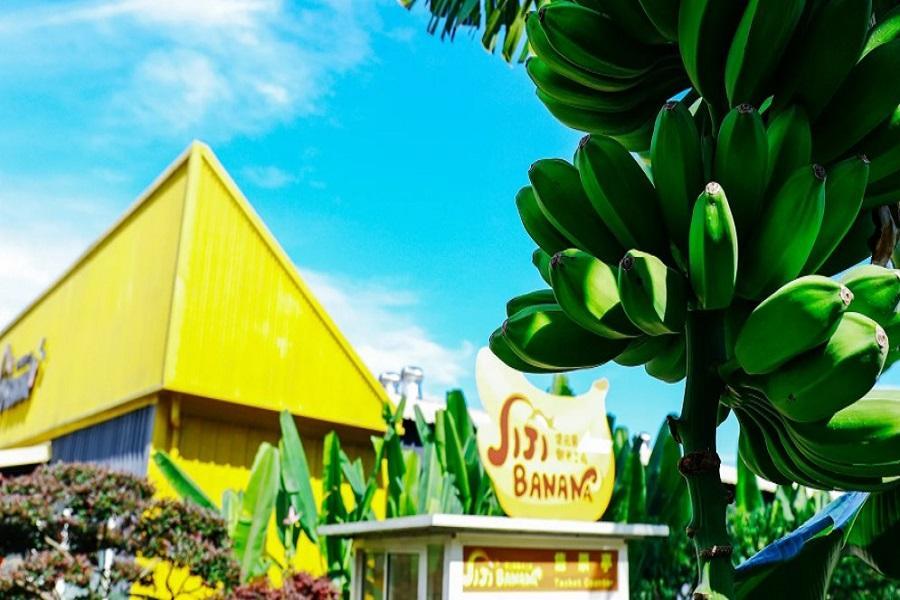 【南投】集元果農場。山蕉同樂會
