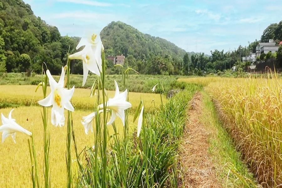 【桃園】好楓戶農家-稻草製作體驗
