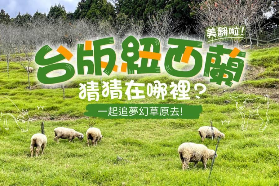 清境農場 陪羊咩咩散步超療癒